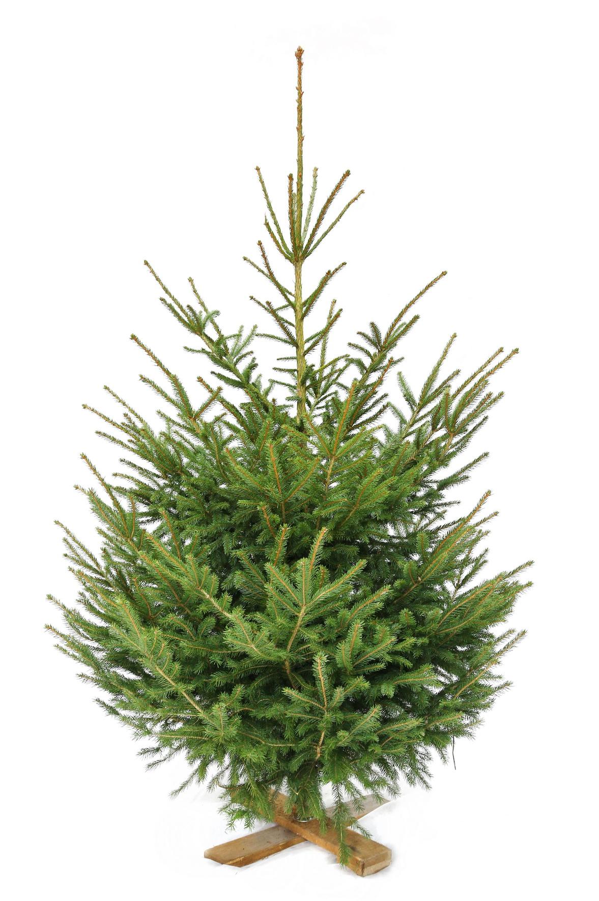 Weihnachtsbaum Nadeln.Angebot Weihnachtsbaeume Ch